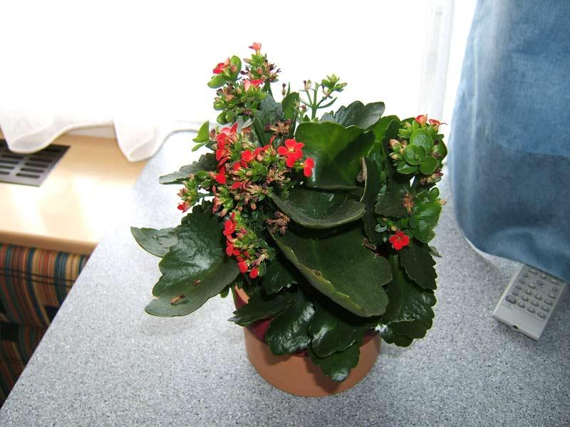Blumen Für Die Wohnung sommersaufen-05